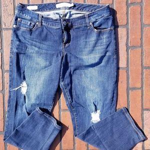 "TORRID ""EX-BOYFRIEND"" Jeans (J1-60)"